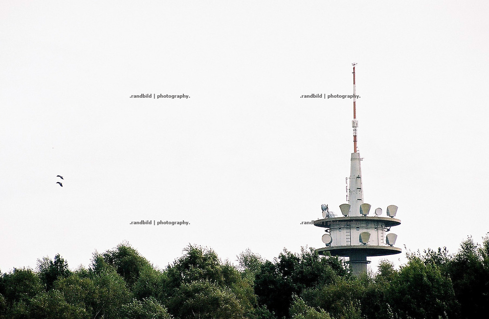 Zwei Krähen umfliegen den Fernsehturm im Wald auf dem Drawehn, einem Höhenzug im Westen Lüchow-Dannenbergs.