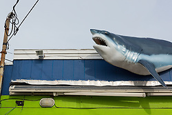 plastic shark on a building in Montauk, NY
