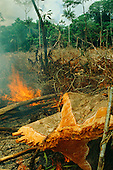 Tropical cultures: Human impact: economy, environmental issues.