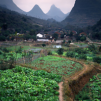 AA01199-04...CHINA - Farmers field in the village of Caoping along the Li River.
