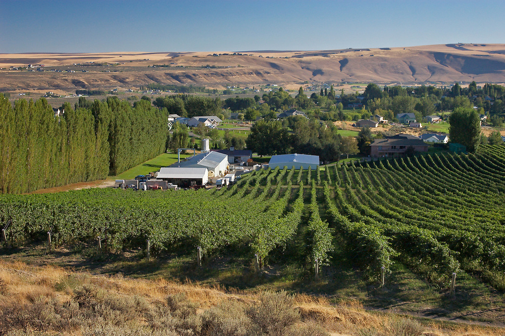 Badger Mountain Vineyards and Powers Winery; Richland, Columbia Valley, Washington.