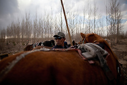 A Mongolian ethnic minority farmer looks at trees that have been planted to stop desertification the Taminchagan dersert in Kunlun Qi in the Inner Mongolia Autonomous Region of China on 24 April 2011. Inner Mongolia, China's third largest province, is fighting severe desertification, much like the provinces of Xinjiang, Gansu, Qinghai, Ningxia, Shaanxi, Heilongjiang and Hebei. Over-grazing, logging, expanding farms and population pressure, along with droughts have steadily turned once fertile grasslands into sandy plains. China has adopted measures to stop the land degradation such as reforestation, resettling nomadic Mongolians from grasslands to urban areas and restricting grazing areas. Tree planting has become a key government effort to combat desertification and supporting the government's reforestation endeavors are numerous non-governmental organizations (NGOs), such as Shanghai Roots & Shoots. The NGO launched the Million Tree Project in 2007 in Kulun Qi with aims to plant its first million trees by 2014 to hinder the expanding desert. To-date, they have planted more than 600,000 trees.