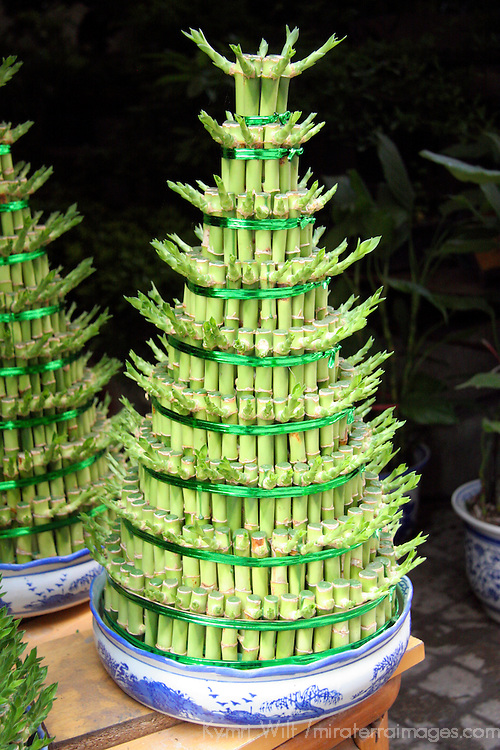 Asia, China, Chongqing. A lucky bamboo Christmas tree in a Chinese Flower Market in Chongqing.