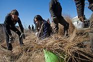 High Line Spring Cutback 2012