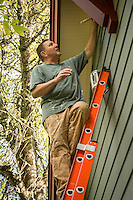 Semi retired software developer, programmer and marketer Chris McAllister nears the end of a three month project, painting his 1910 craftsman house in Calistoga.