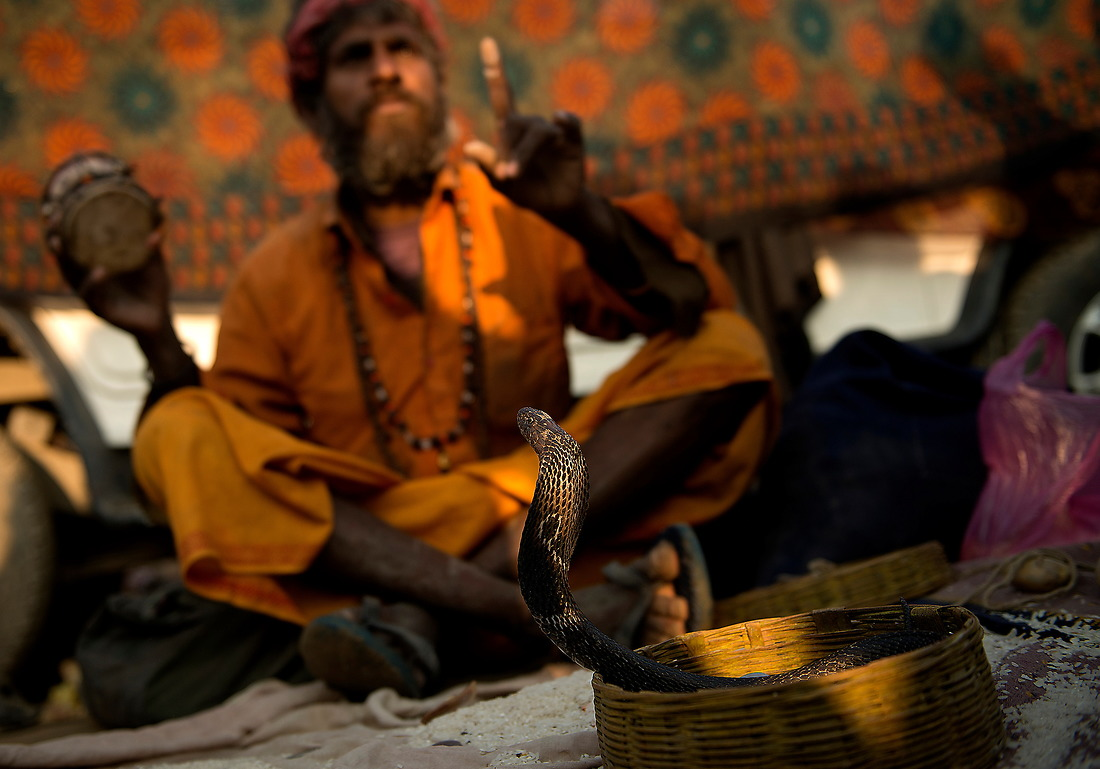 A man with a Cobra looks for donations from Kumbh Mela pilgrims walking by on February 7, 2013  in Allahabad, India . In India, Hindus have a special reverence for the cobra. Hindus believe in the immortality of the snake due to the shedding of its skin, and a snake eating its tail is a Hindu symbol of eternity. — © Jeremy Lock/