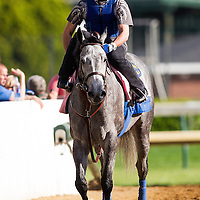 Midnight Lucky in preparation for the Kentucky Oaks at Churchill Downs in Louisville, KY on May 01, 2013. (Alex Evers/ Eclipse Sportswire)