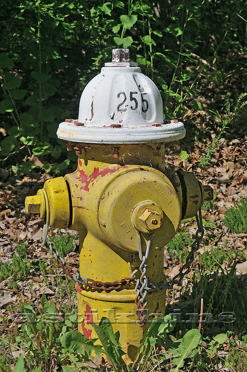 Hydrant in forest.