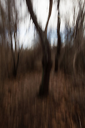 abstraction of a forest in Montauk, NY