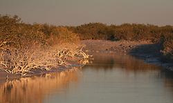 Mangroves line a tidal inlet on Mandora Station