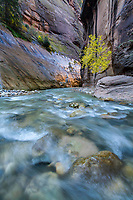 The Virgin River flows through the Zion Narrows as the sun illuminates the canyon walls.