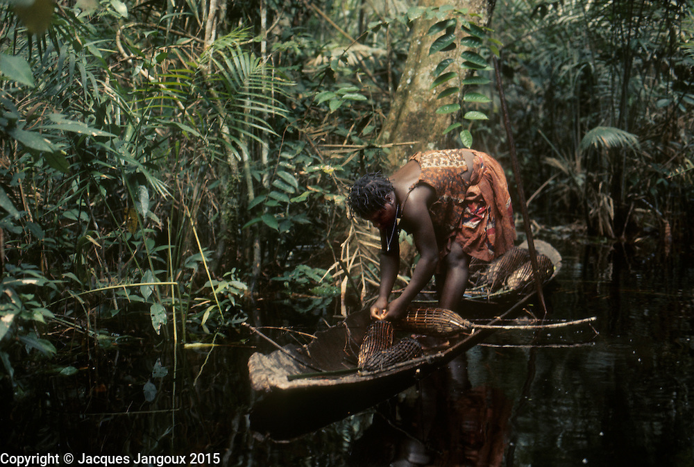 Africa, Democratic Republic of the Congo, Ngiri River islands area, Libinza tribe, woman setting up spring fish trapa in swamp forest.