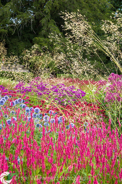 A rich display of herbaceous planting, softened by grasses, at Trentham Gardens, Staffordshire.