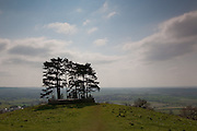At the top of Wotton Hill are trees surrounded by a stone wall. The plaque on the gates reads: Trees were planted here in 1815 to commemorate the victory at Waterloo. They had become thin by the end of the Crimean War and were felled for a bonfire. This walled enclosure was erected and the site replanted with trees to commemorate the Jubilee of Her late Majesty Queen Victoria (1887), following the burning on this spot of one of a chain of celebration beacons which then spanned the country. Interplanted with new trees in 1952 by subscription of :- The family of the late Rev James Hardyman, the family of the late W J Williams Esq., Mrs A G Bury, Brig & Mrs Alan Durrant, A H Jotcham, Esq., Wotton-under-Edge Traders Association, Wotton-under-Edge Town Trustees.