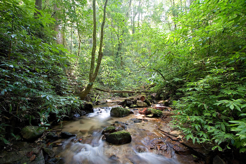 Small stream and lush montane rainforest, Doi Inthanon National park, Chiang Mai province, Thailand