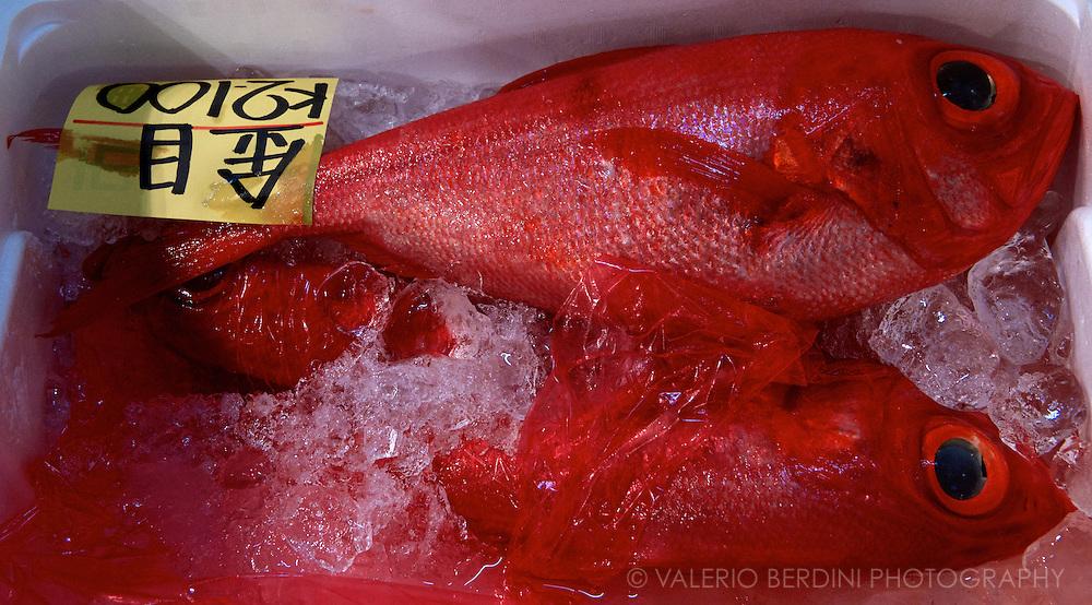 Bigeyes (Priacanthidae) fishes on sale at Tsukiji fish Market in Tokyo. Japan 2013