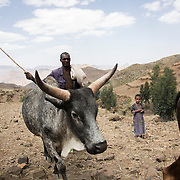 Farmer Kasa Kebde, 36, and his daughter Bri Kasa, 6 looking after their cattle in Adi Sibhat, Tigray, Ethiopia.