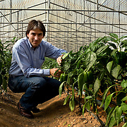 Helmy Abouleish, Managing Director of the leading Egyptian Organic foods and products producer, Sekem Group, checks pepper crops inside one of the greenhouses at the Sekem farm Nov 4, 2008 in Belbeis, Egypt. Helmy's father, Dr. Ibrahim Abouleish founded the project in 1977 on what was then barren desert, and since has grown it into a lush oasis ecompassing several farms, production plants, schools and even a local medical facility.