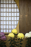 Chrysanthemums and Japanese window at Isuien Garden which has been preserved since its creation during the Meiji period, the only strolling garden in Nara. .