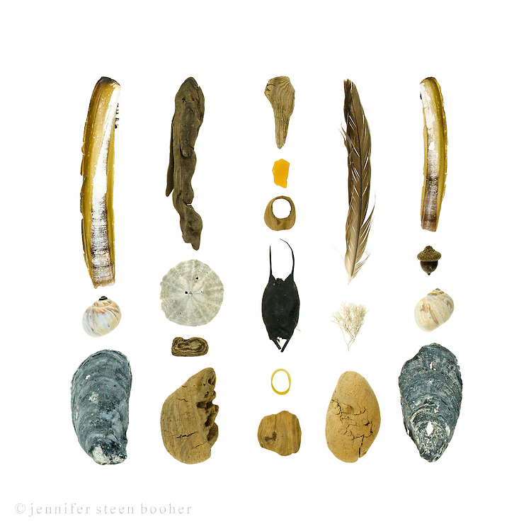 Razor Clam (Ensis directus), Moon snail (Lunatia heros), Blue Mussel (Mytilus edulis), driftwood, Sand Dollar (Echinarachnius parma), sea glass, skate egg case (can't guess at the species), lobster-claw band, feather, Coralline (Corallina officinalis), acorn (Quercus sp.), Atlantic Oyster (Crassostrea virginica)