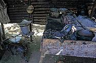 Pig in kitchen in Yumuri, Guantanamo, Cuba.