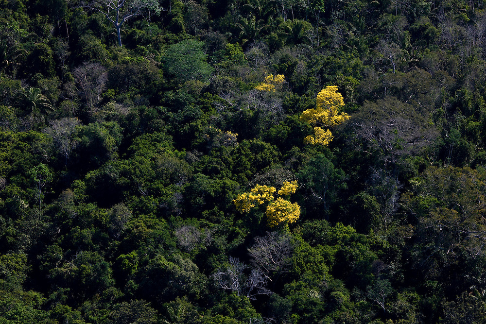 Amazon Rainforest canopy in Mato Grosso, Brazil, August 6, 2008. Daniel Beltra/Greenpeace