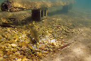 Spawning Benches<br /> <br /> ENGBRETSON UNDERWATER PHOTO
