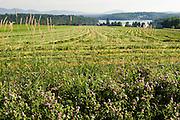 hay field above Little Hosmer Pond