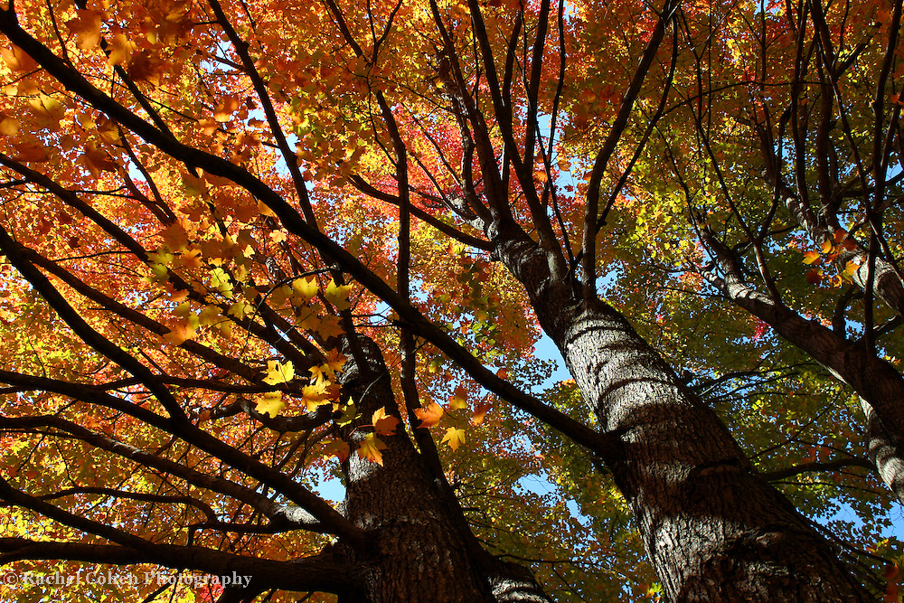 &quot;Beneath Autumn's Splendor&quot;<br />