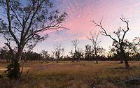 Sunset in an open grassy woodland, Wyperfeld National Park, Victoria, Australia