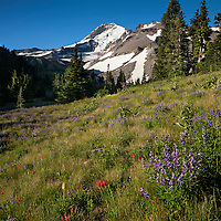 OR01685-00...OREGON - Mount Hood from a meadow at Elk Cove in the Mount Hood Wilderness area.