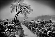 Japan's Tsunami Zone Revisited: Sakura Cherry Trees Blossom/Life's Subtle Return