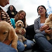 Venta de perritos en el Junquito. 31-08-2008 (ivan gonzalez)