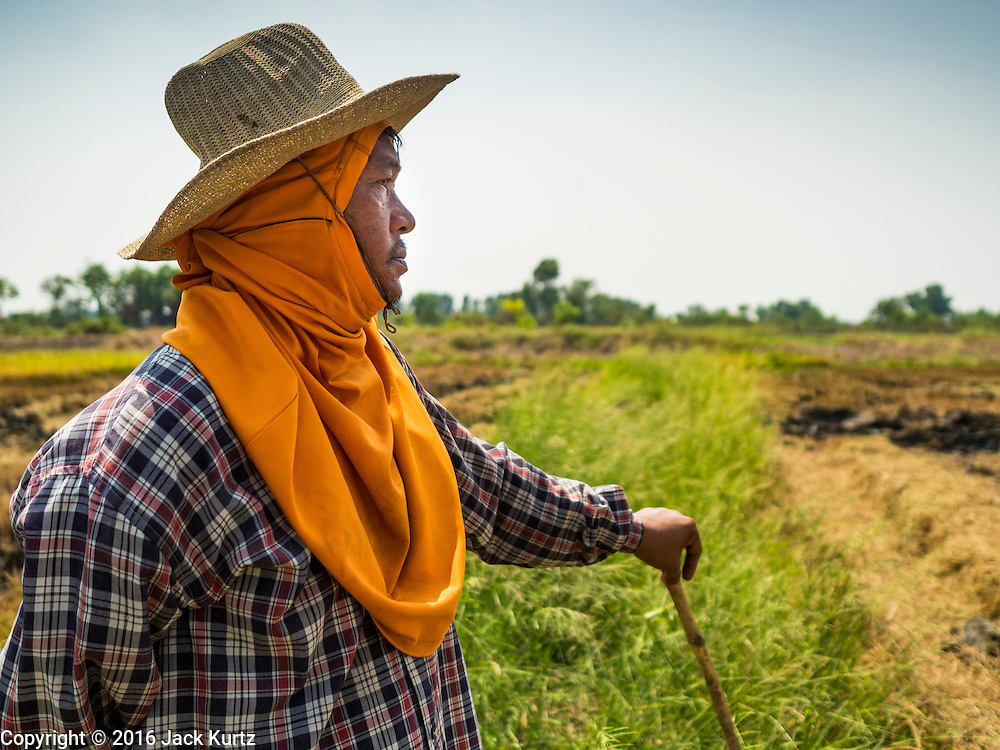 16 MARCH 2016 - BANG SOMBUN, NAKHON NAYOK, THAILAND:  A farmer looks over his rice field during the harvest the last of the 2015 rice crop in Nakhon Nayok province. Normally the farmers would plant a second crop of rice but they can't this year because their won't be enough water to irrigate the fields. The drought in Thailand is worsening and has spread to 14 provinces in the agricultural heartland of Thailand. Communities along the Bang Pakong River, which flows into the Gulf of Siam, have been especially hard hit since salt water has intruded into domestic water supplies as far upstream as Prachin Buri, about 100 miles from the mouth of the river at the Gulf of Siam. Water is being trucked to hospitals in the area because they can't use the salty water.     PHOTO BY JACK KURTZ