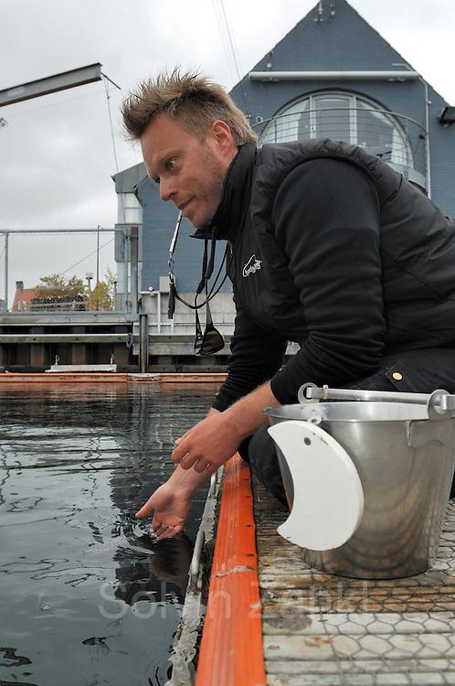 Harbour porpoise Phocoena Phocoena Fjord & Baelt - Jakob Højer Kristensen -
