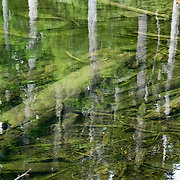 """Trees reflect in Mason Lake, on Ira Spring Memorial Trail #1038, in Alpine Lakes Wilderness Area (Mount Baker Snoqualmie National Forest), near Interstate 90, Washington, USA. Published in """"Light Travel: Photography on the Go"""" book by Tom Dempsey 2009, 2010."""