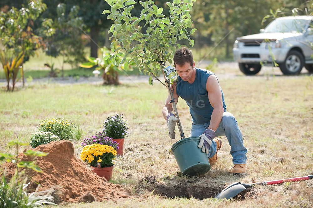 Man planting a tree rob lang images licensing and for Planting trees landscaping
