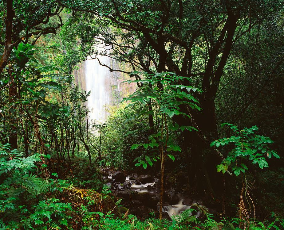 0803-1014 ~ Copyright: George H. H. Huey ~ 400 Foot Waimoku Falls, a 2 mile walk from the coast at Kipahulu, drains into Oheo Gulch. Haleakala National Park, Maui, Hawaii.