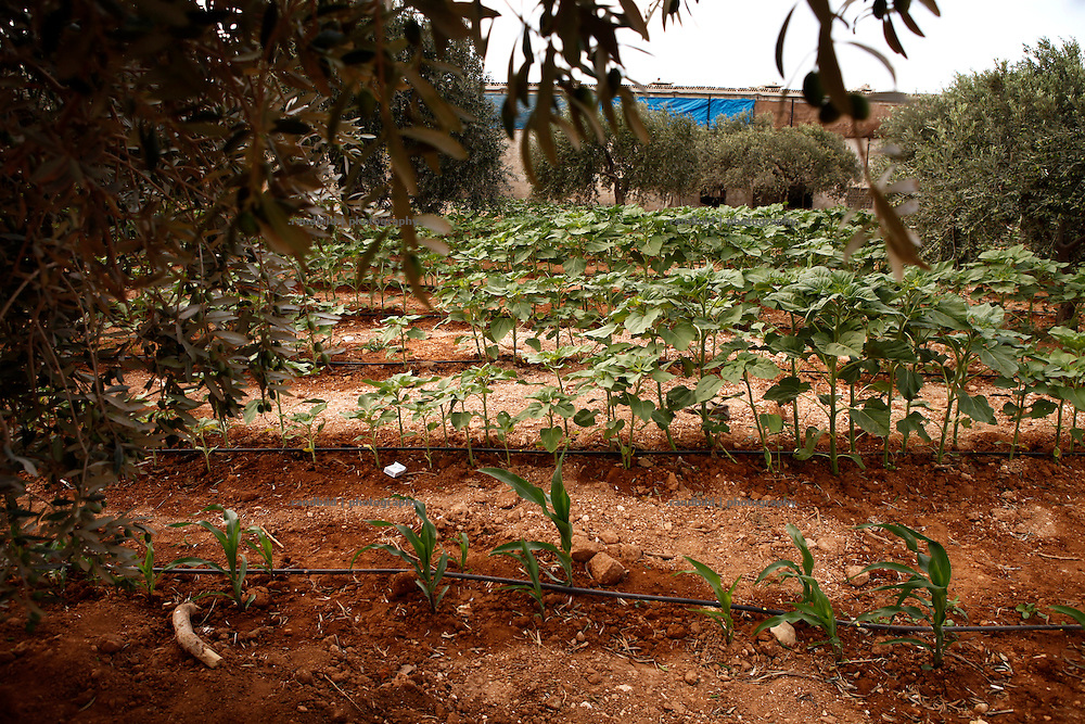 A businessman drilled his own bore whole in order to get drinking water to the surface. Surrounding fields can be provided with by a irrigation system grow vegetables in a commercial manner. But beyound this little area all fruits and vegetables reply on rain water. Since it&acute;s very dry since the last winter in the region the farmers expect a poor harvest of olives, oranges and figs which is going to affect peoples living condions as well.<br />