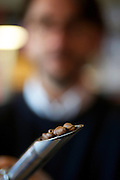 The Grey Seal Coffee and Art Cafe in Glandford. Pictured is David Lane inspecting some roasted coffee beans. <br /> <br /> Picture: MARK BULLIMORE