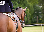 Side Saddle Association Area 4 Summer Show - Beyton