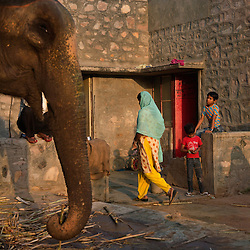 Veterinary care during festival season in India.