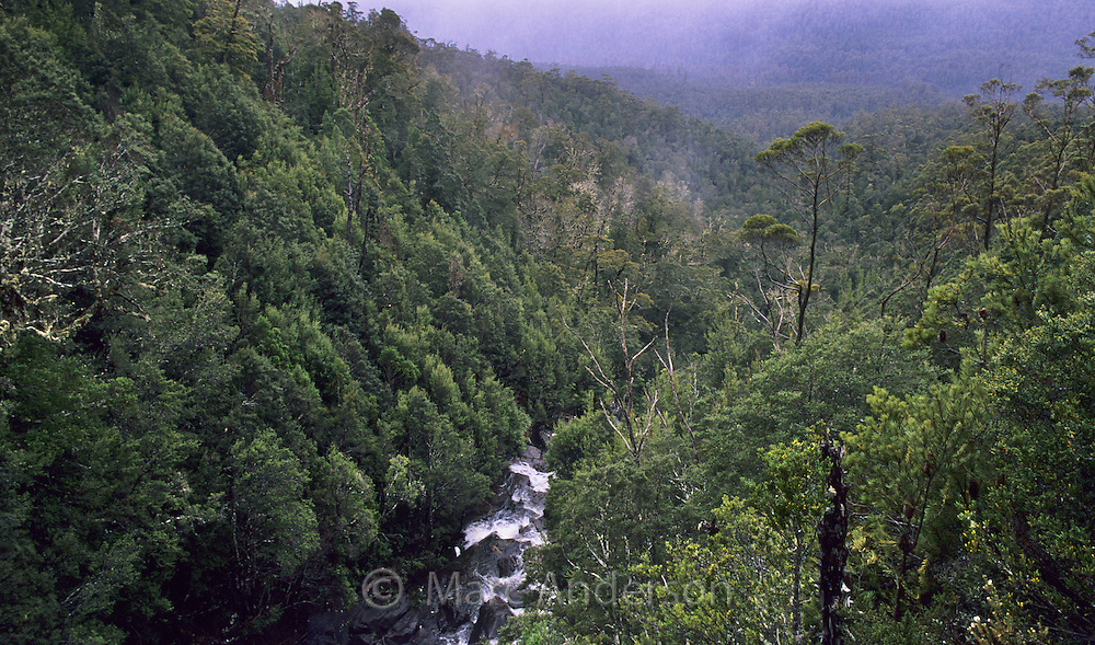 Flowing stream in the Hartz Mountains National Park, Tasmania