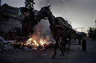 SYRIA, ALEPPO : A horse pass by a pile of garbage burnt in the northern restive city of Aleppo on September 25, 2012. ALESSIO ROMENZI