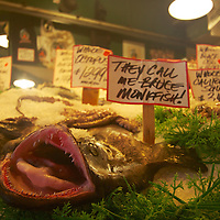 Bruce the Monkfish at the Pike place fish market?is it moves when you get this close to take a photo..but it is real?