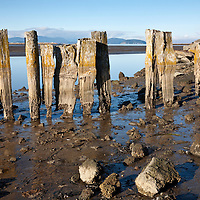 WA10072-00...WASHINGTON - Remains of an old structure along the shores of Padilla Bay.