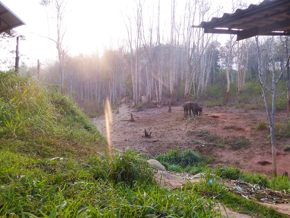 This is an image of a young elephant Tangmoo, in the jungle with his mother. Nukul loves being around nature. She chose this image because she likes the effect of the sun bursting behind the trees.