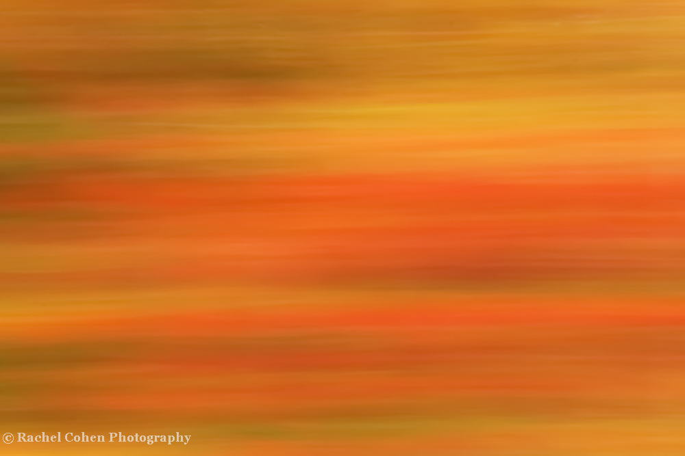 &quot;Autumn Warmth&quot;<br /> <br /> The beautiful colors of autumn in rich warm tones in a motion blur!!<br /> <br /> Nature Abstracts by Rachel Cohen