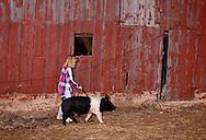 Teenage girl trains 4H show hog, Oklahoma, <br /> MODEL RELEASED, <br /> PROPERTY RELEASED