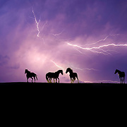 Lightning and Wild Horses on Hilltop